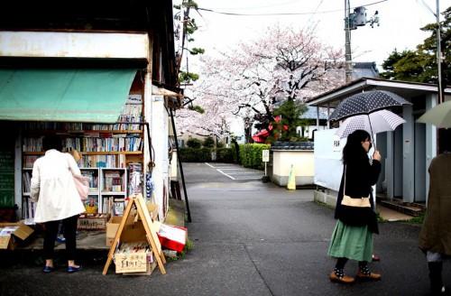 午前8:00小雨 8分咲きの桜に囲まれ朝市が始った