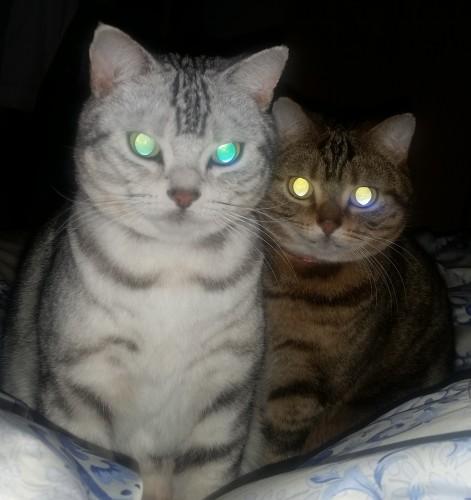 真夜中、眠っているテラススタッフがふと視線を感じ起きたら・・・恐っ!