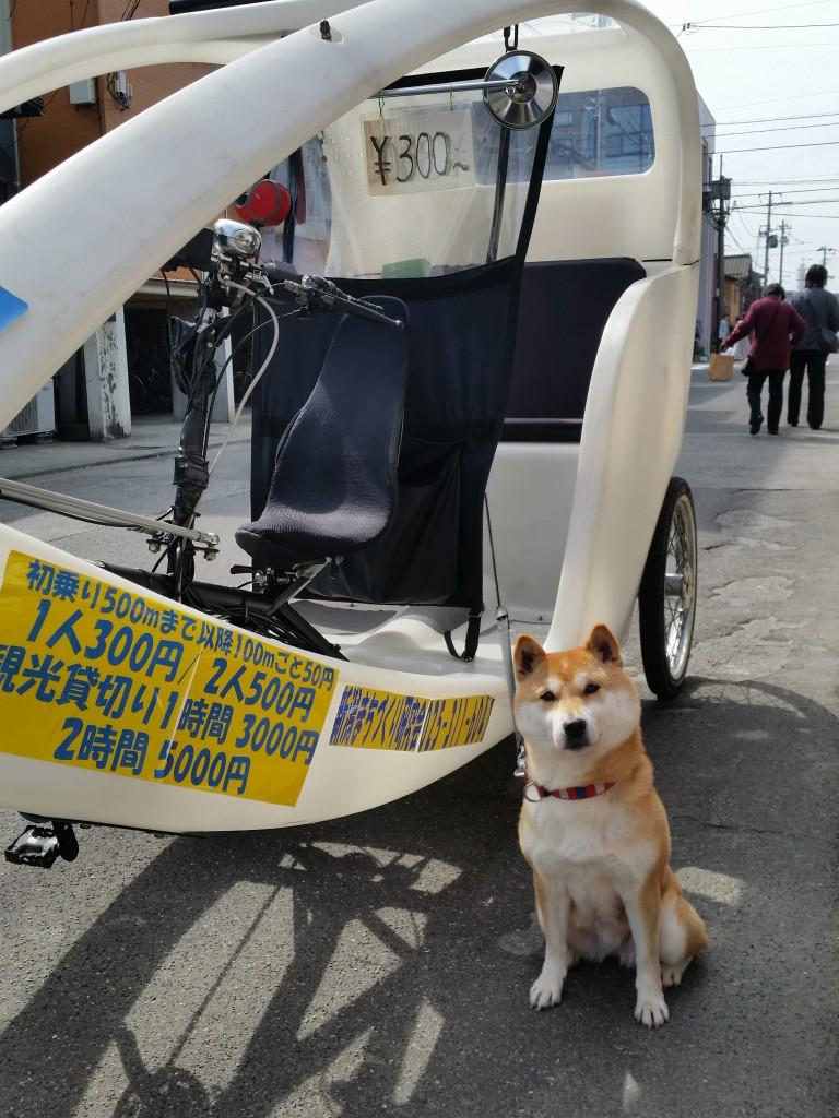 """2016.3.6 ベロタクシー""""おいで""""ちゃん"""