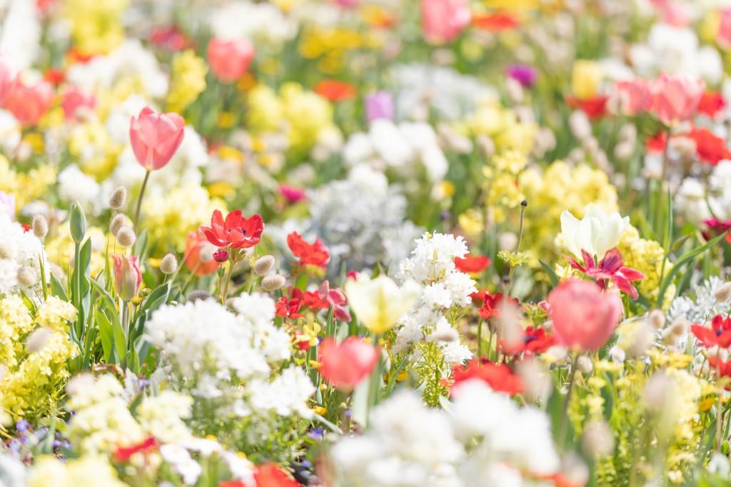 spring201943FTHG7186_TP_V