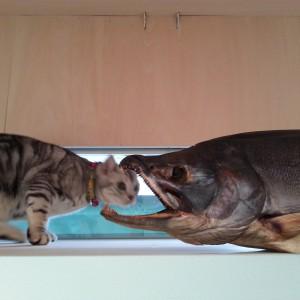 村上の鮭&沼垂のネコ