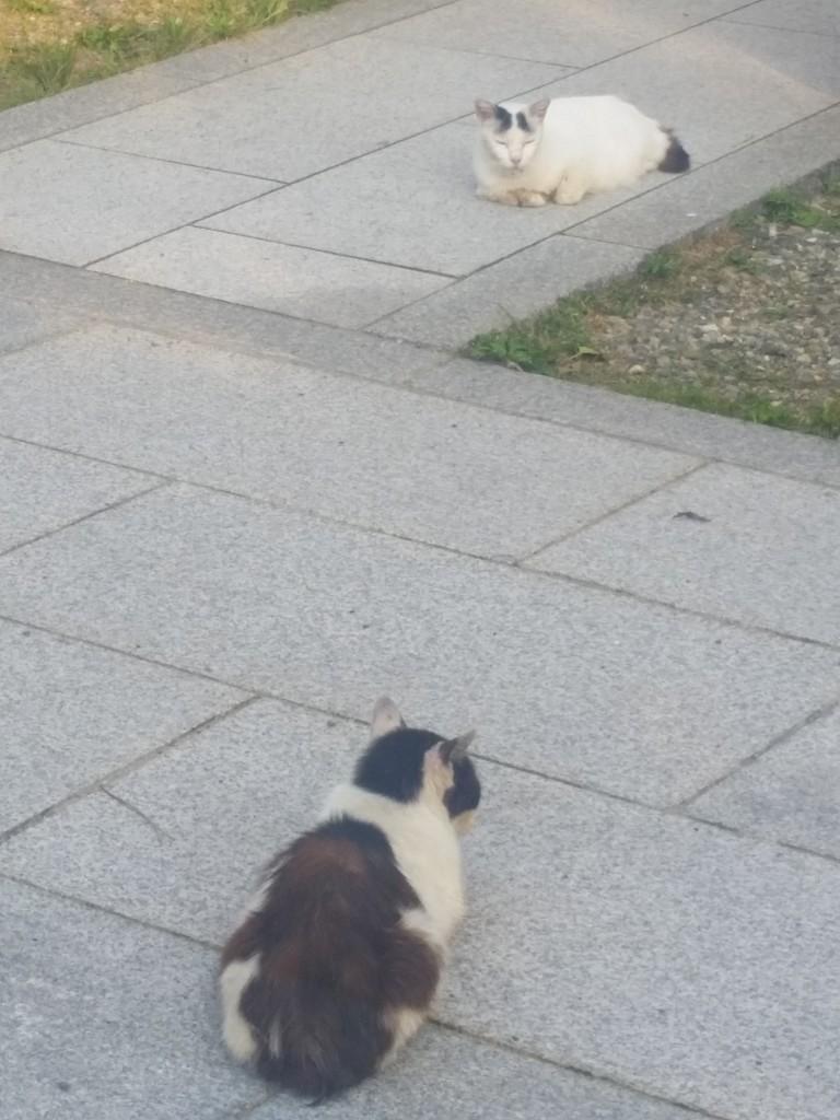 ネコの程よい距離感