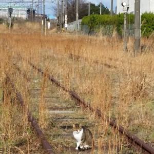 廃線のところで、ひなたぼっこの沼ネコ
